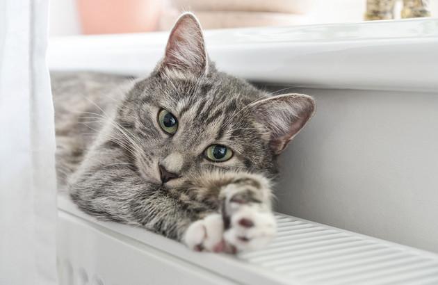 chat étendu sur radiateur