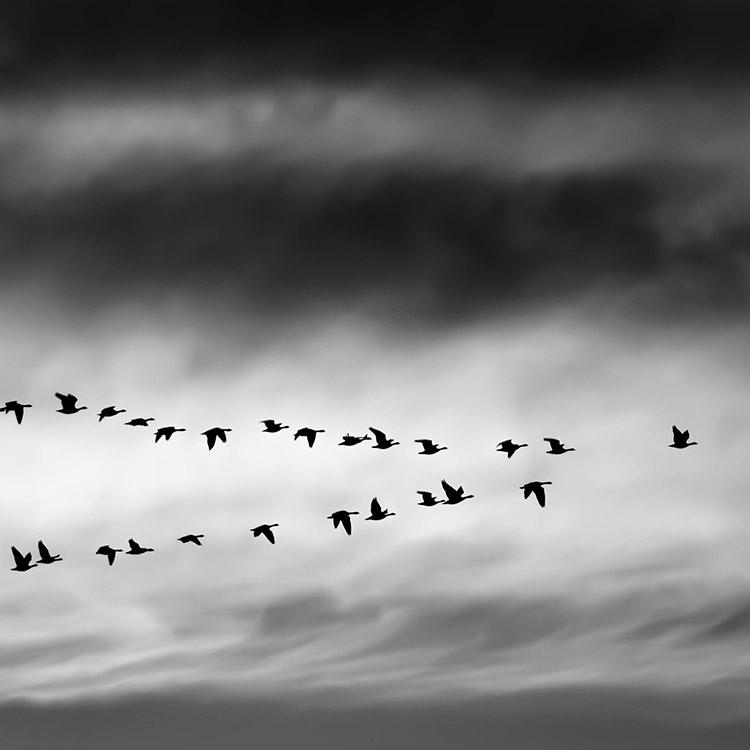 Oiseaux dans le ciel gris